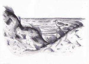 duinen dunes meeuw seagull sea zee