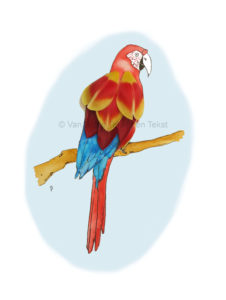 Bird vogel parrot papegaai tulip petals tulpi