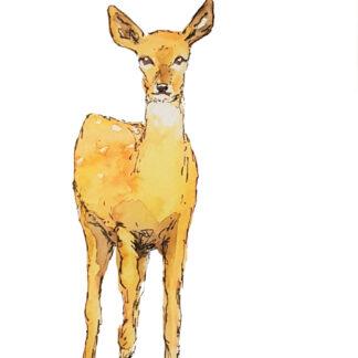 bos dieren deer ree forest