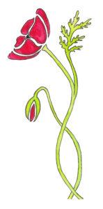 klaproos ontwerpstudio ansichtkaart poppy