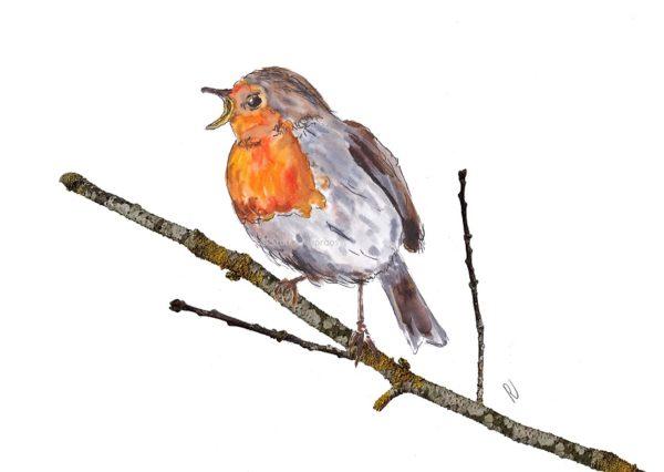 Ansichtkaart postcard roodborstje robin vogel bird