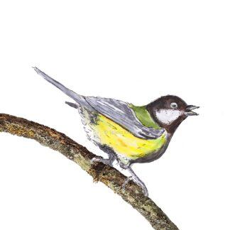 ansichtkaart postcard birds vogel koolmees great tit
