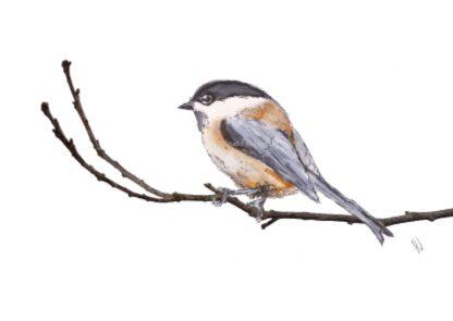 ansichtkaart postcard vogel bird matkopmees willow tit