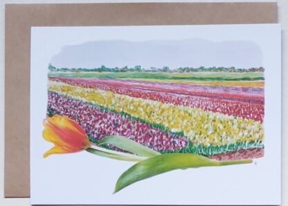 ansichtkaart tulpen tulip holland postcard bulbs flowers bulbfield