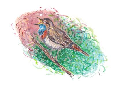 vogel bird ansichtkaart kaart postcard blauwborst