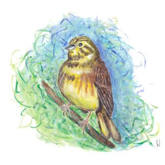 bird vogel geelgors ansichtkaart kaart postcard