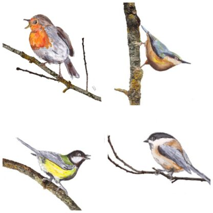 birds vogel roodborstje boomklever koolmees matkopmees