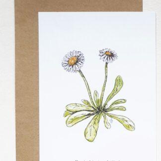 ansichtkaart madelief daisy lief sweet postcard