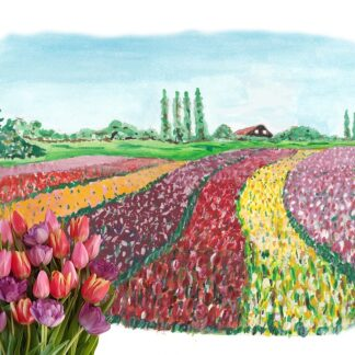 typical dutch typisch hollands tulpen tulips postcard kaart