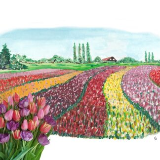 ansichtkaart typisch hollands typical dutchtulpen tulip holland postcard