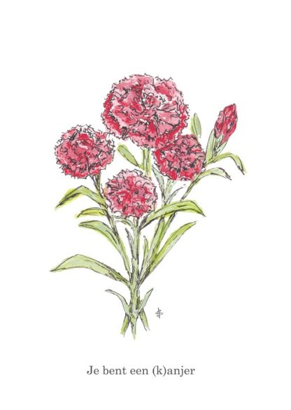 kanjer anjer lief sweet flower bloem wens wish ansichtkaart postcard